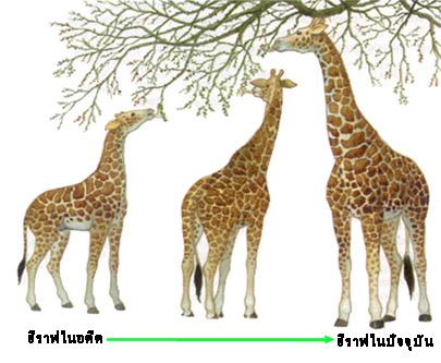 วิวัฒนาการของสิ่งมีชีวิต (1)